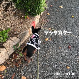 【0108】お散歩を拒否られる の巻