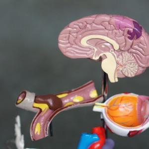万病の原因になる病気、リッキーガット症候群を自分で治す方法