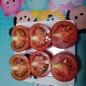 6/25 中玉トマトの初収獲&キュウリの復活模様&うどん粉病対策
