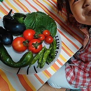 お庭やベランダで野菜を作るメリットは大きいですよ