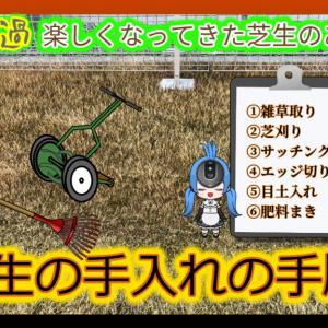 2月3月の芝生の手入れ|初心者向けの手順を紹介