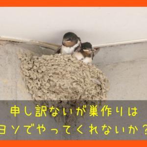 うれし、かなし、ツバメの巣作り|へーベルハウスの軒下はツバメに好かれやすいかもしれない話