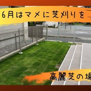 芝刈り機の選び方・6月の芝の管理について