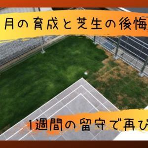 猛暑日続きで高麗芝でも夏枯れが心配|8月の芝生の管理