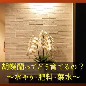胡蝶蘭をいただいたらどうすればよいか?|水やりの方法を解説
