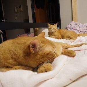 【猫】アンニュイな一時(ひととき)