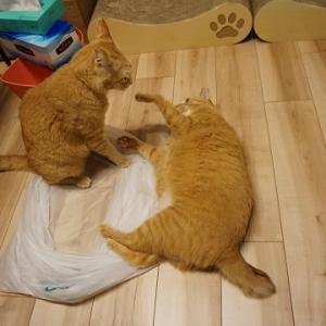 【猫】猫のたくらみ