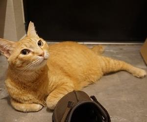 【猫】猫の特徴のいくつか♪