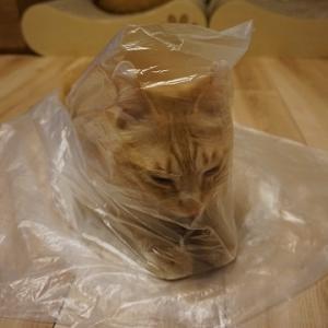【猫】ビニール仮面あらわる