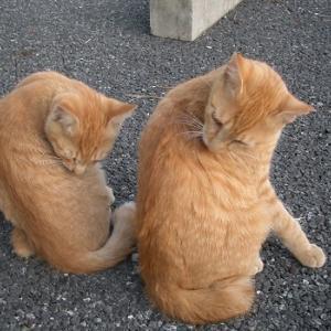 【ブログ10周年!】猫たちとともに振り返る
