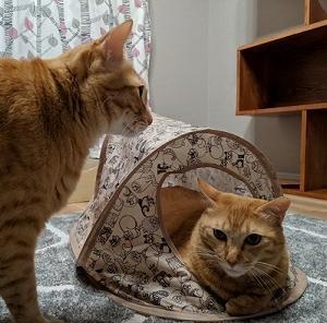【猫】猫対応家具に登ろう!その2