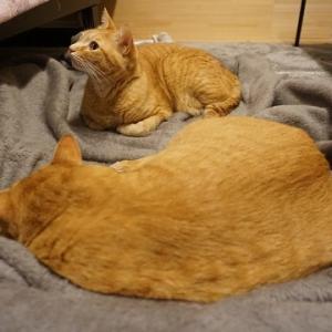 【猫】元気に出発できるかな?