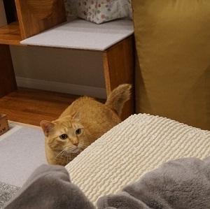 【猫動画】虎猫の快感ブラッシング♪