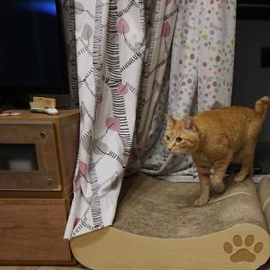 【猫動画】ベランダの窓辺の猫「いれてよ~」