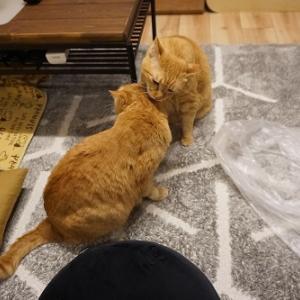 【猫】激しくも穏やかな愛猫たちの一日(ケンカ)
