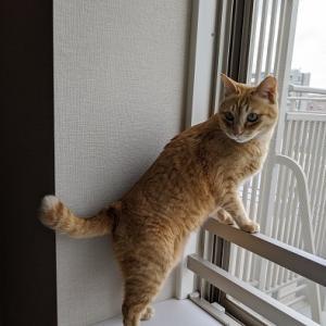【猫動画】ハトを見て興奮する猫