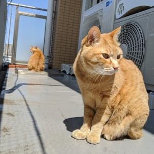 【猫動画】なんだか涼しい、スダレだよ~