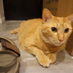 【猫動画】サンダル・フェチの猫たち♪
