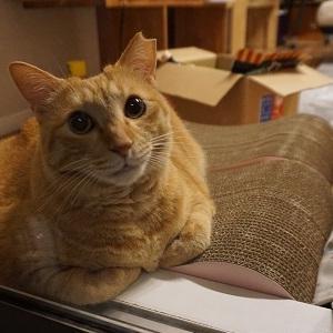 【猫】窓辺の猫は何を想う?