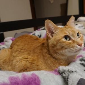 【猫】猫の疑問/自分のブログを読みなおそう!