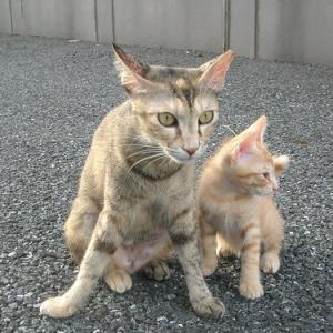【猫】ドラ10才記念第2弾、大いなる母猫の愛