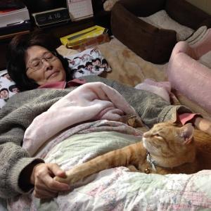 【猫】7回忌の母と愛猫の想い出
