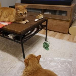 【猫】ビニールで快適♪/美人看護師はどこへ?
