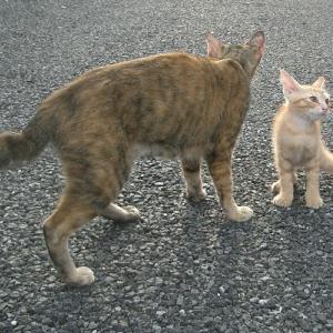 【猫】愛猫のお値段は?