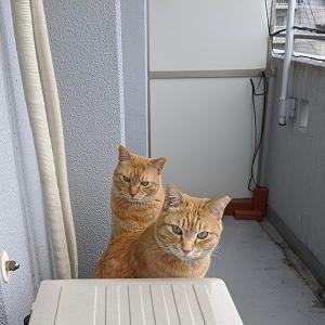 【猫】今年最後のセミ愛好会