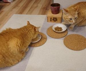 【猫】そっくり猫にも個性ある/声優交代の衝撃
