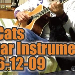 "My cats 変わらないでいて〜 Guitar instrumental with my cat ""空""chan https://youtu.be/aso8NCp0S-Q"