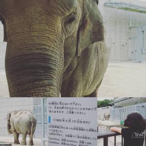 岡崎東公園|動物円|象のふじ子|2017-06-18