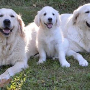 りそなポイント 盲導犬支援
