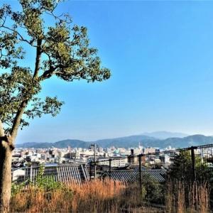 午前中松山総合公園散策。6914歩。