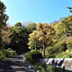桜満開の大嶺台・石畳の枝垂れ桜。7614歩。
