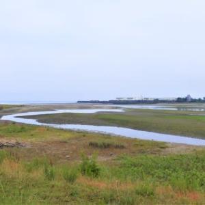 重信河口、モンチッチ海岸、かわら館。3693歩。雉に逢う。