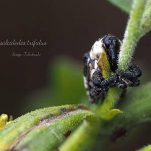 高橋先生昆虫展2021-01-21)、とりわけ、珍しいキョウチクトウスズメなど。