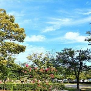 午後、大可賀公園・松江橋・海岸散歩。5869歩