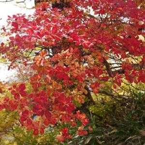 栂池自然園の紅葉(2)~2021年10月白馬+α旅行記その7