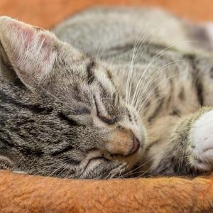 万病の特効薬!睡眠の質を上げるには〇〇断ちがおすすめ