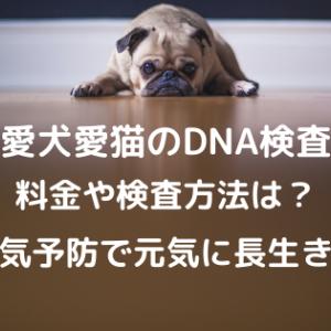 愛犬愛猫DNA検査!料金や期間・検査方法。病気のリスクがわかるポンテリー