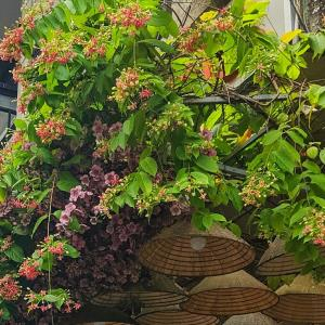 ホーチミンの植物