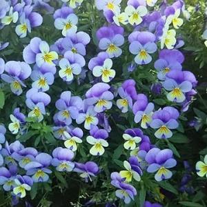 路傍の花6月12日