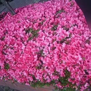 路傍の花6月13日