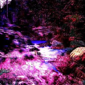 第2965号「桜へ」