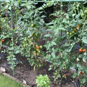 家庭菜園はほどほどに