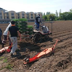 関田農園様でネギの定植作業を体験させていただきました