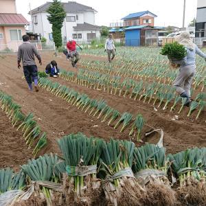 農作業体験会を開催しました