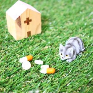 猫の去勢・避妊手術の必要性について