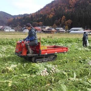 収穫作業も大詰め